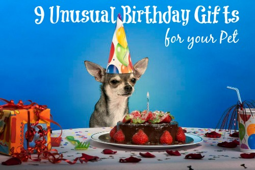 9 Unusual Birthday Gifts for your Pet
