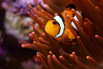 101 Screen Free Gifts for Teens - Aquarium Passes