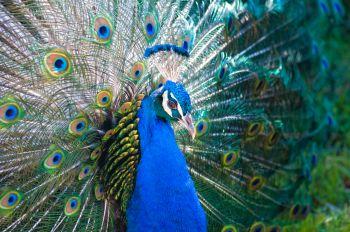 101 Screen Free Gifts for Teens - Zoo Membership
