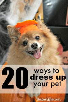 20 Ways to Dress up Your Pet