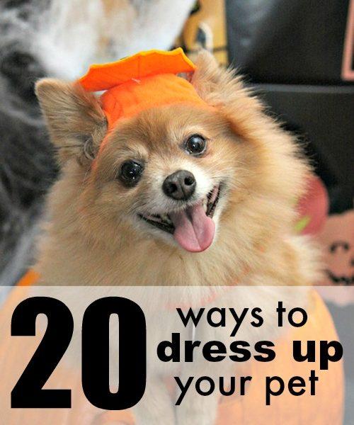 20 Ways to Dress up Your Pet