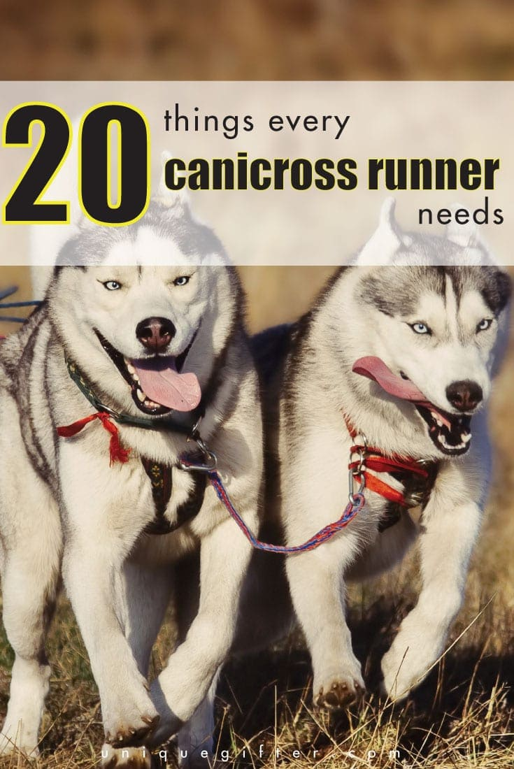 20 Things Every Canicross Runner Needs