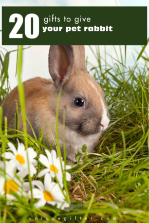 20 Gifts for Your Pet Rabbit