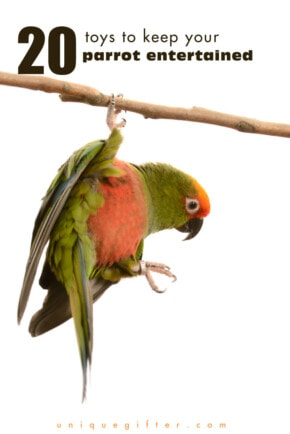 20 Toys to Keep Your Parrot Entertained