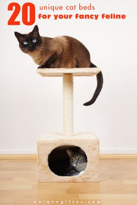 20 Unique Cat Beds for your Fancy Feline