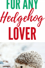 20 Gift Ideas for Hedgehog Lovers