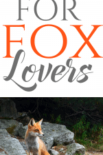 20 Gift Ideas for Fox Lovers