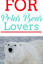20 Gift Ideas for Polar Bear Lovers