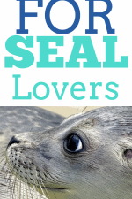 20 Gift Ideas for Seal Lovers