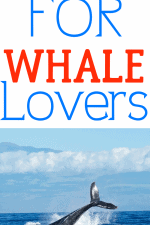 20 Gift Ideas for Whale Lovers