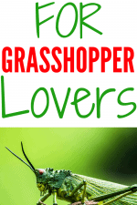 20 Gift Ideas for Grasshopper Lovers