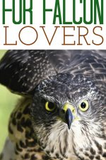 20 Gift Ideas for Falcon Lovers