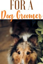 20 Gift Ideas for Dog Groomers