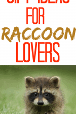 Gift Ideas for Raccoon Lovers