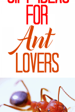 20 Gift Ideas for Ant Lovers