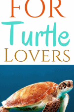 Gift Ideas for Turtle Lovers