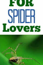 20 Gift Ideas for Spider Lovers