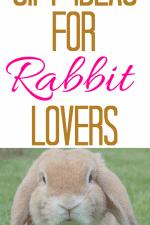 Gift Ideas for Rabbit Lovers