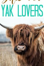 20 Gift Ideas for Yak Lovers