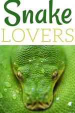 20 Gift Ideas for Snake Lovers