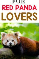 Gifts for Red Panda Lovers