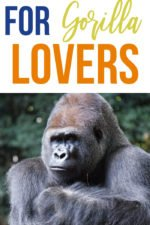 Top 20 Gift Ideas for Gorilla Lovers