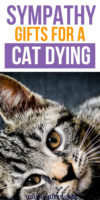 20 Sympathy Gifts for a Cat Dying