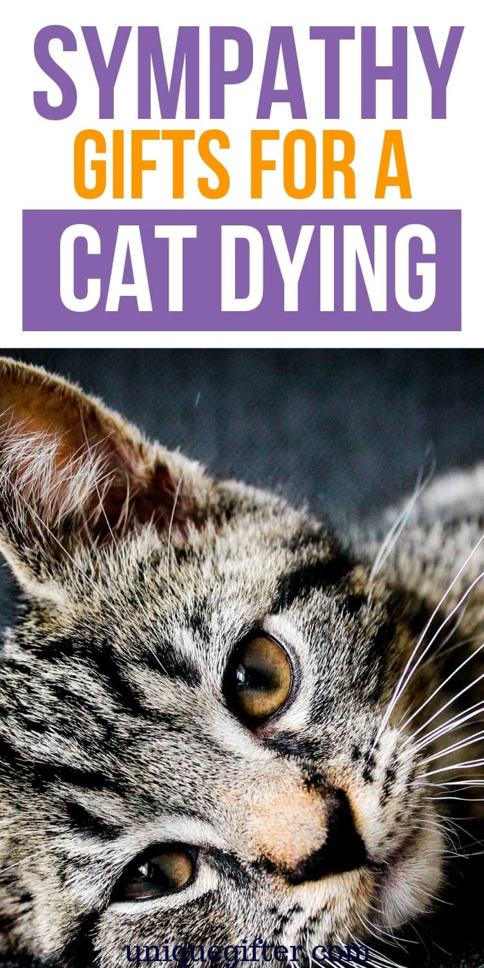 Sympathy Gifts for a Cat Dying | Dying Cat Gifts | Losing A Pet Gifts | Pet Bereavement Gifts | Loss of Pet Sympathy Gifts | #gifts #giftguide #presents #pet #cat #sympathy #uniquegifter