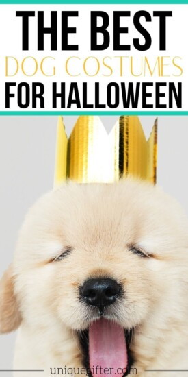 The Best Dog Costumes for Halloween | Easy Halloween Costumes | Pet Costumes | Dog Costumes | Creative Dog Costumes | Halloween For Your Dog | #halloween #holidays #dog #costume #best #uniquegifter