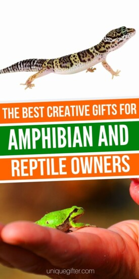 Gift Ideas For People Who Love Reptiles & Amphibians   Gifts For Snake Lovers   Gifts For Amphibian Lovers   Gifts For Reptile Fanatics   #gifts #giftguide #presents #amphibians #reptiles #unqiuegifter