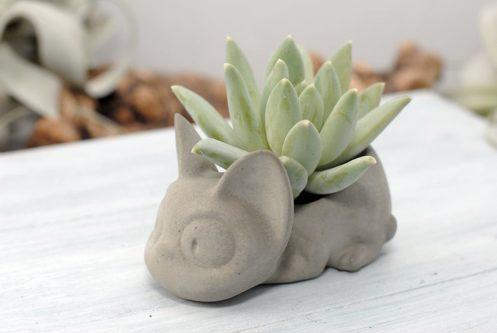 Jiji Succulent Holder