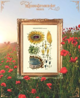 Botanical Art Poster