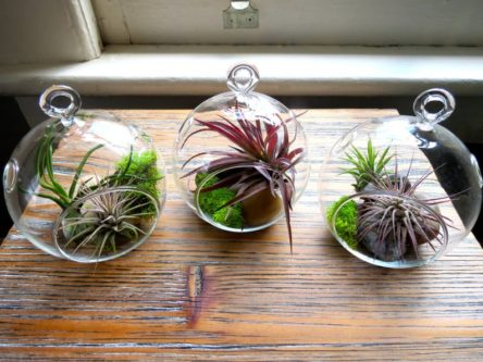 Hanging Air Plant Terrariums- Set of 3