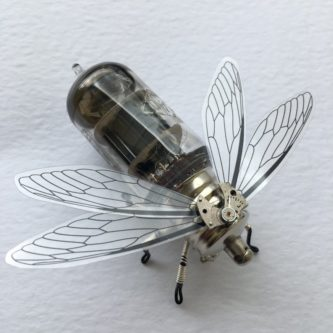 insect clockwork beetle