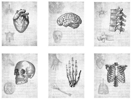Medical Anatomy Print Set